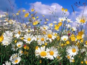 terapia-floral-2