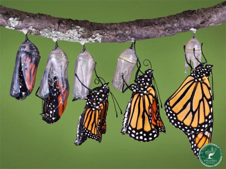 Cuide de Voce e Transforme o Seu Mundo - Mosaico Natural